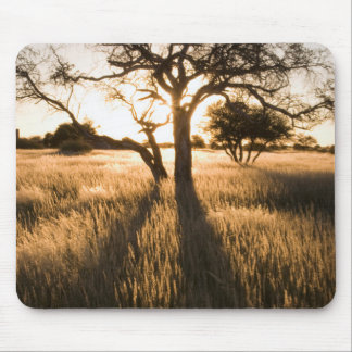 Silhouette Of Acacia Trees In Grass. Mariental Mouse Mat