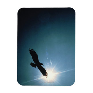 Silhouette of bald eagle flying in sky rectangular photo magnet
