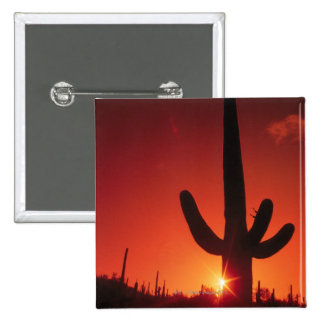 Silhouette of cactus at dusk , Saguaro National 15 Cm Square Badge
