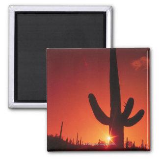 Silhouette of cactus at dusk , Saguaro National Magnet