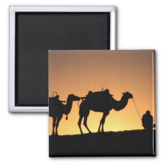 Silhouette of camel caravan on the desert at 2 square magnet