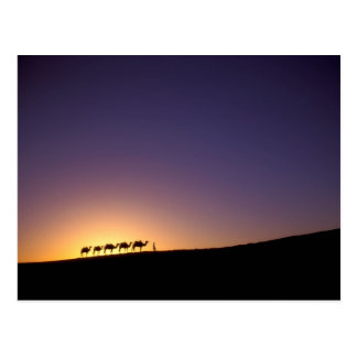 Silhouette of camel caravan on the desert at postcard