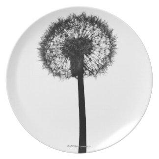 Silhouette of dandelion plate