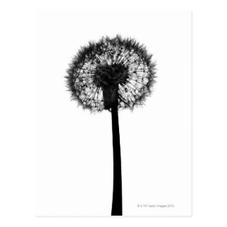 Silhouette of dandelion post card