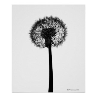 Silhouette of dandelion posters