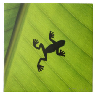 Silhouette of frog through banana leaf large square tile