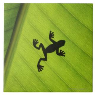 Silhouette of frog through banana leaf tile