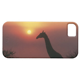 Silhouette of Giraffe (Giraffa Camelopardalis) iPhone 5 Case