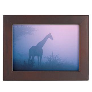 Silhouette Of Giraffe (Giraffa Camelopardalis) Keepsake Box