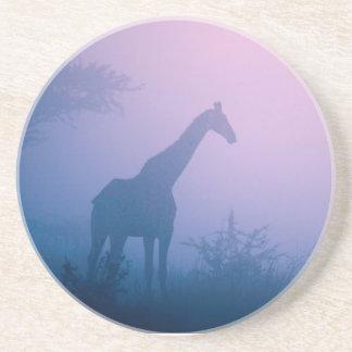 Silhouette Of Giraffe (Giraffa Camelopardalis) Sandstone Coaster