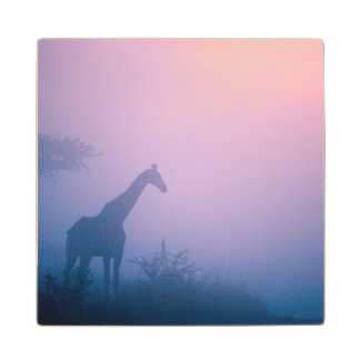 Silhouette Of Giraffe (Giraffa Camelopardalis) Wood Coaster