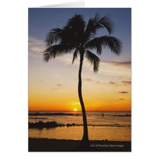 Silhouette of one Palm Tree by a Red Orange Sunset Card