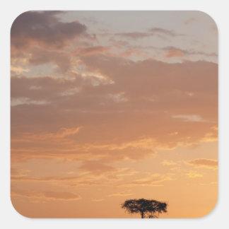 Silhouette of tree on plain, Masai Mara Square Sticker