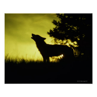 Silhouette of wolf howling print