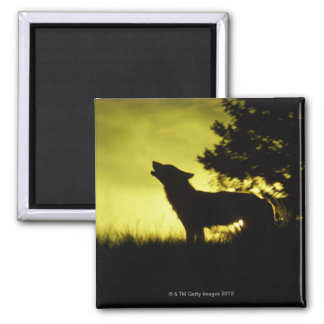 Silhouette of wolf howling square magnet