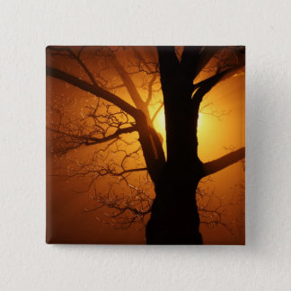 Silhouette Tree in Sunset 15 Cm Square Badge
