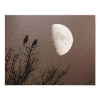 Silhouette trees and birds with moon photograph