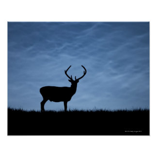 Silhouetted Red Deer Stag at Night Poster