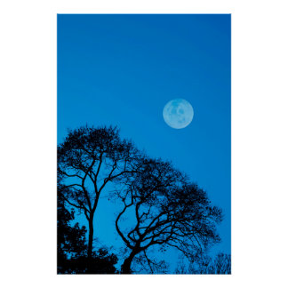 Silhouetted trees and full moon poster