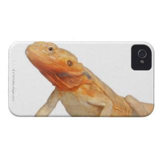 SilkBacks scaleless Bearded Dragon - Pogona iPhone 4 Cases
