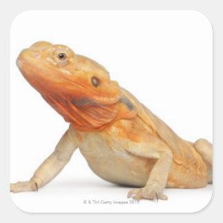 SilkBacks scaleless Bearded Dragon - Pogona Sticker
