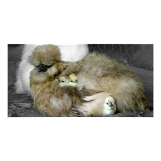Silkie Hens with Chicks Peeking out of Feathers Custom Photo Card