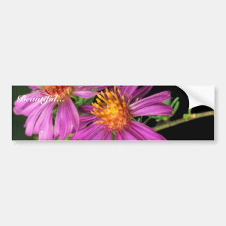 Silky Aster Bumper Stickers