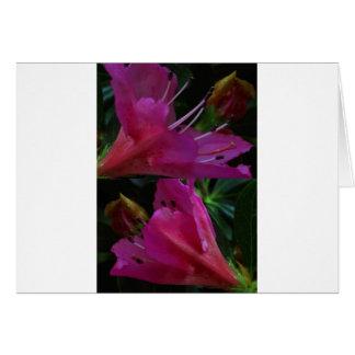 Silky PINK Sensual Flowers : Greetings n Goodluck Greeting Card