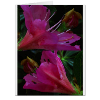 Silky PINK Sensual Flowers : Greetings n Goodluck Large Greeting Card