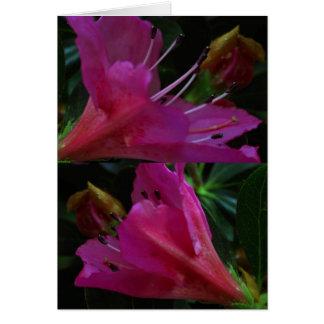 Silky PINK Sensual Flowers : Greetings n Goodluck Greeting Cards
