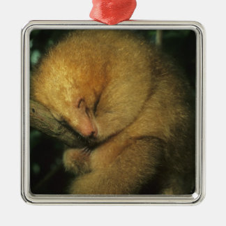 Silky Pygmy) Anteater, Cyclopes didactylus), Silver-Colored Square Decoration