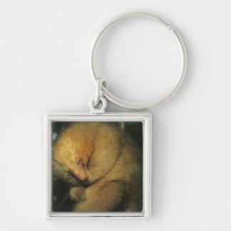Silky Pygmy) Anteater, Cyclopes didactylus), Silver-Colored Square Key Ring
