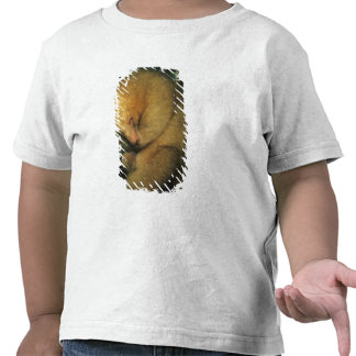 Silky Pygmy) Anteater, Cyclopes didactylus), Tshirt