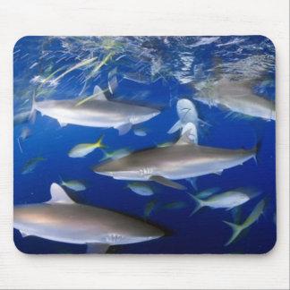 silky-sharks-feeding-689693-ga mouse mat
