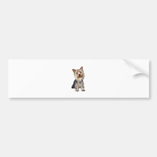 Silky Terrier (B) Bumper Stickers
