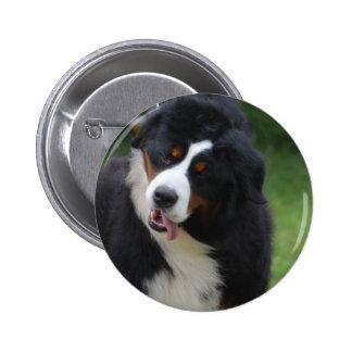 Silly Bernese Mountain Dog 6 Cm Round Badge