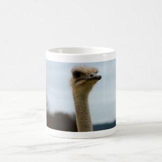 Silly Bird Photo Ostrich Face Head Closeup Basic White Mug