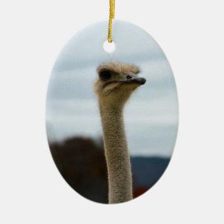 Silly Bird Photo Ostrich Face Head Closeup Christmas Ornament