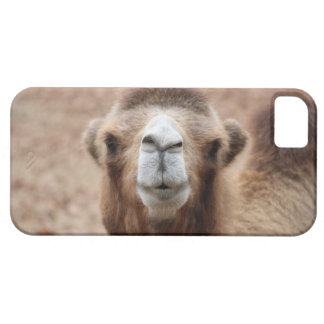 Silly Camel iPhone 5 Cover