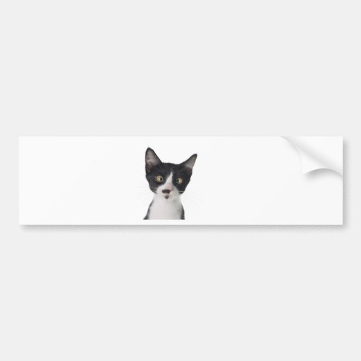 silly cat bumper stickers