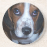 Silly Dog Randy beagle puppy Beverage Coaster