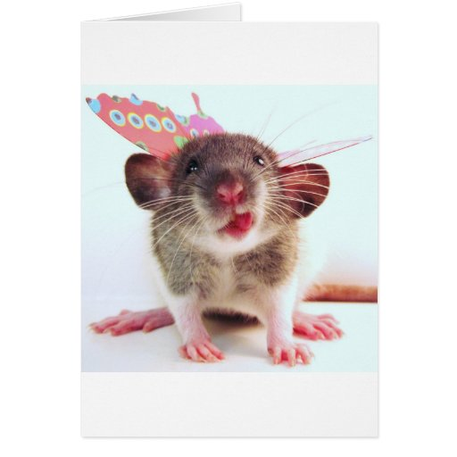 Silly Flutterby Rat Greeting Cards