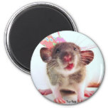 Silly Flutterby Rat Refrigerator Magnets
