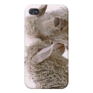 Silly Goats Photo iPhone 4 Cover