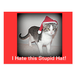 Silly Hat For a cat Postcard