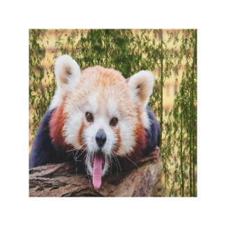 Silly Red Panda Canvas Print