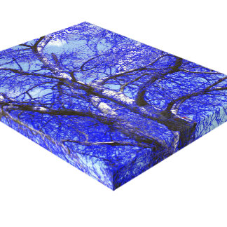 Silver birch in blue canvas gallery wrapped canvas