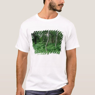 Silver birch trees and ferns, Sherwood Forest T-Shirt