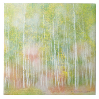 Silver Birch Trees Large Square Tile