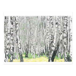 Silver Birch Wood - Postcard